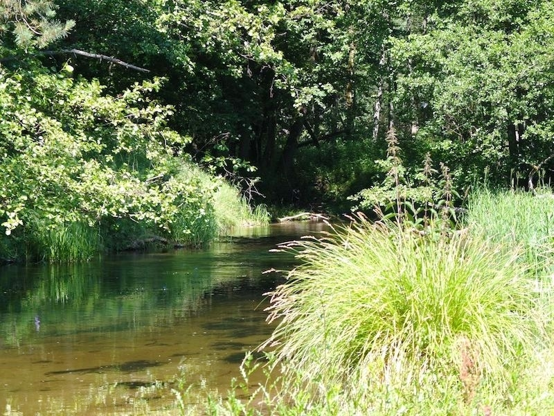 Rzeka Piława - szlak kajakowy