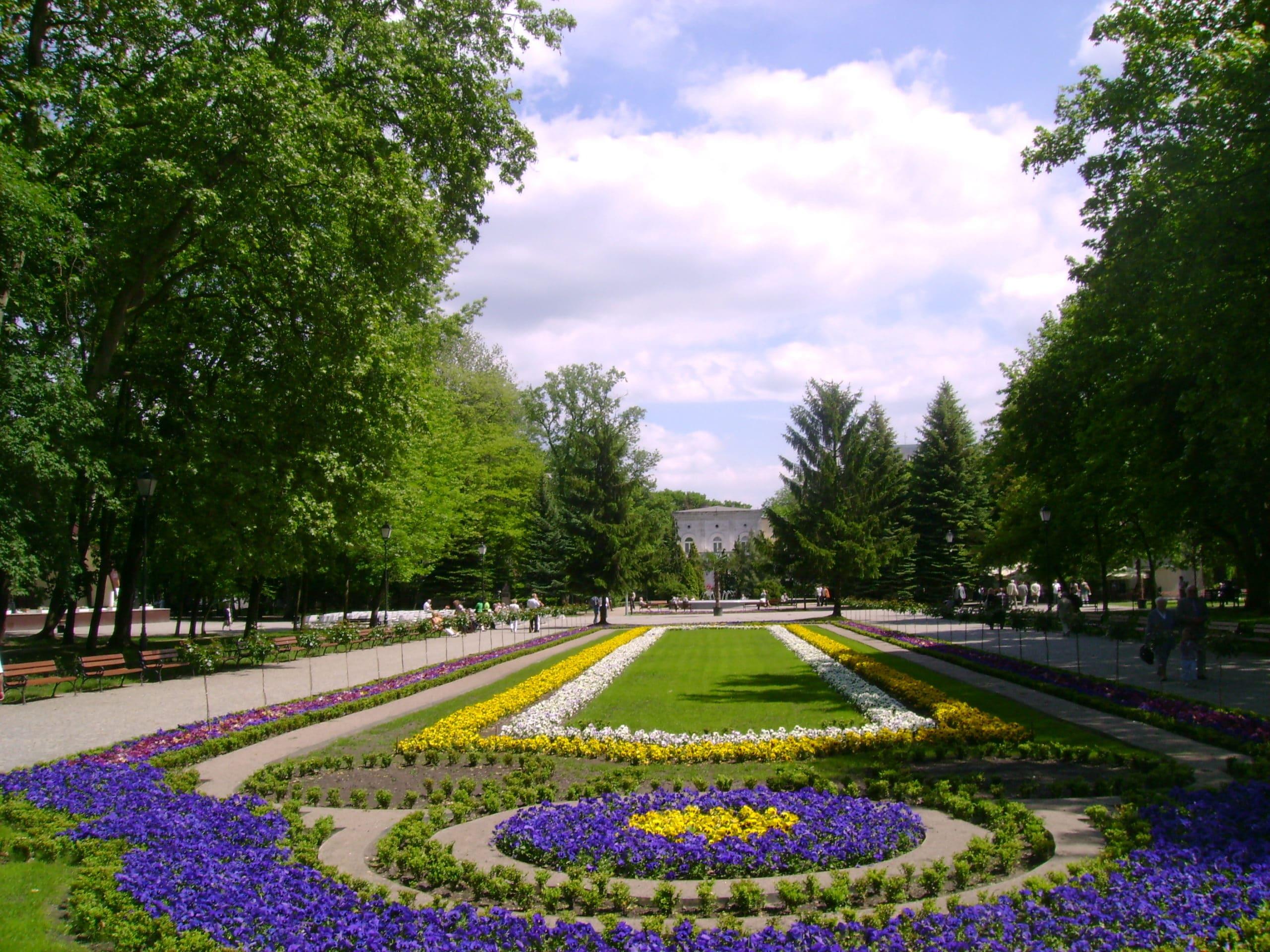 Inowrocław - Dywany kwiatowe