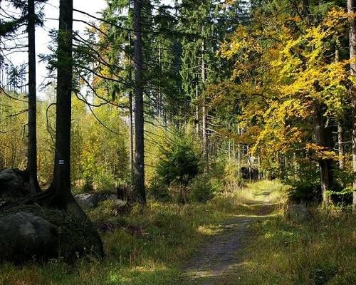 Leśny szlak w okolicach Wambierzyc