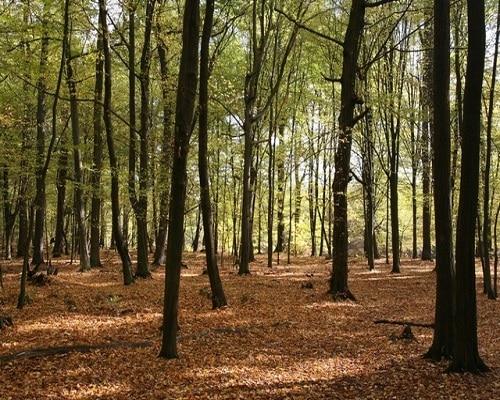 Spała - las